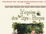 Bichon frisé élevage familial en France