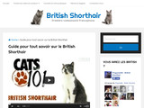 British Shorthair : le guide complet